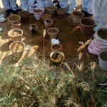 Grade III, IV and V plantation activity (5)