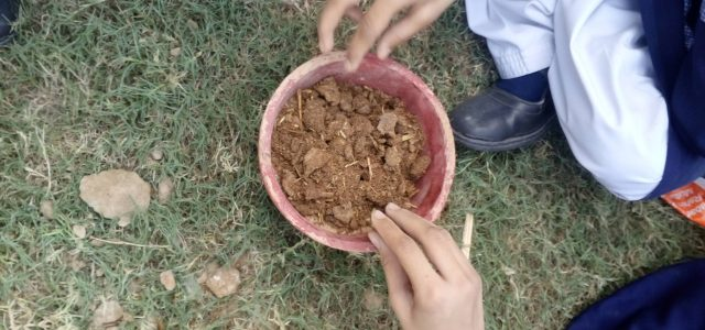 Grade III, IV and V plantation activity (8)