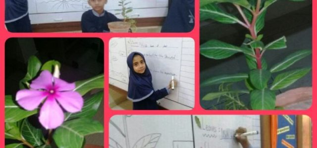 Grade II plant4