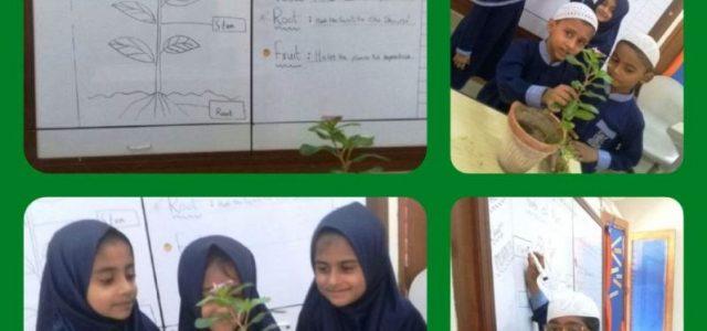 Grade II plant5