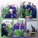 Grade II plant6