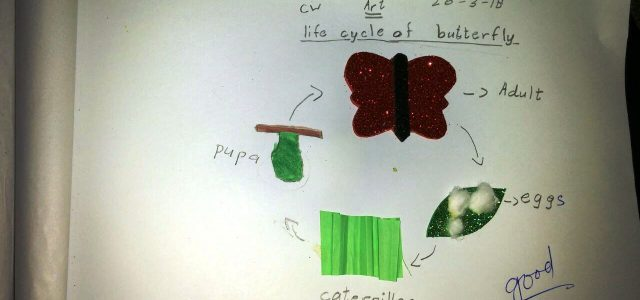 Life Cycle of Butterfly (11)