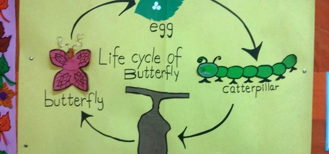 Life Cycle of Butterfly (3)