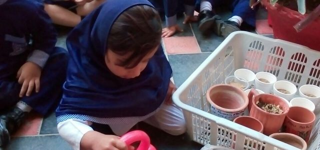 Sprouting Seed with Juniors (11)