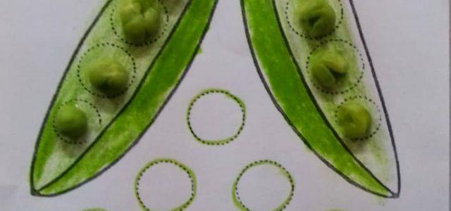 Peas Shelling (1)