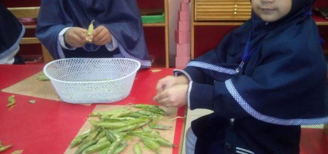 Peas Shelling (17)