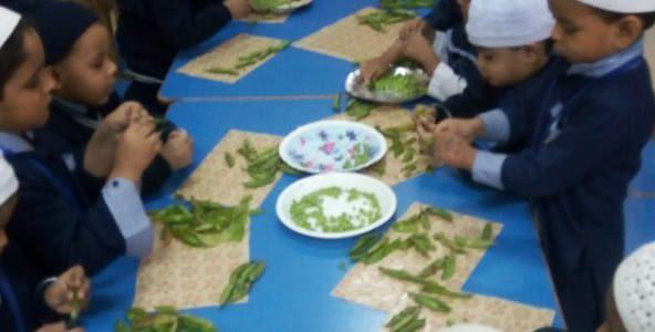 Peas Shelling (3)