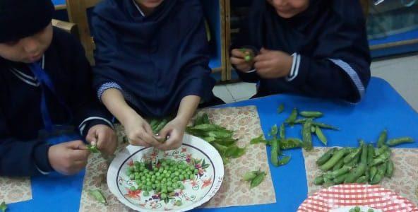 Peas Shelling (4)