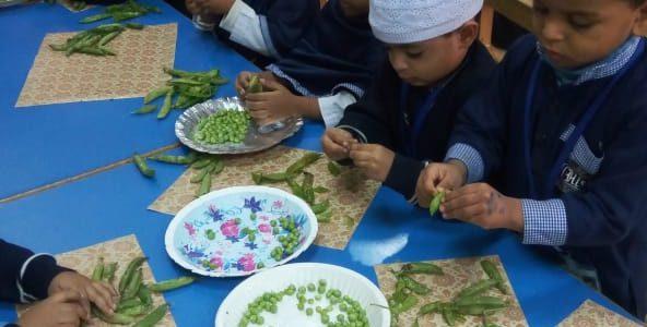 Peas Shelling (5)