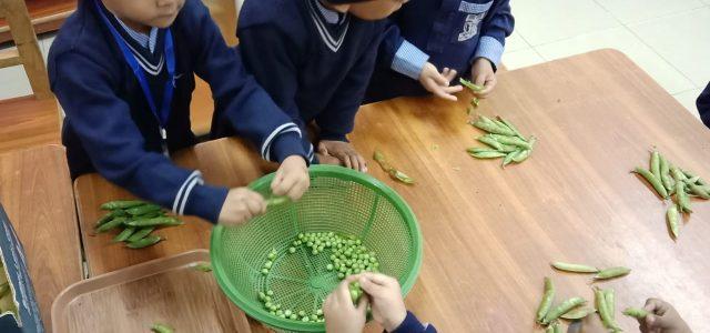 Peas Shelling (7)